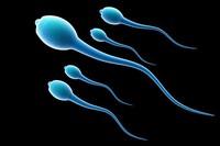 Спермограмма (общая спермограмма + морфология по Крюгеру)