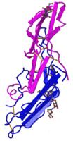 Хорионический гонадотропин (β-ХГЧ)