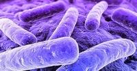 Микоплазма (Mycoplasma genitalium), определение ДНК